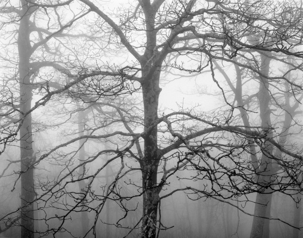 William Lemke, Trees and Fog 2 Blue Ridge