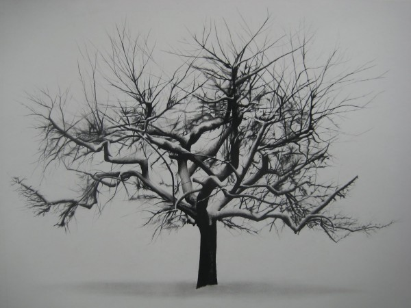 Samuel Jan, Tree in Winter