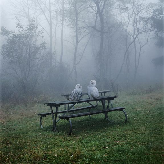 Simen Johan, owls