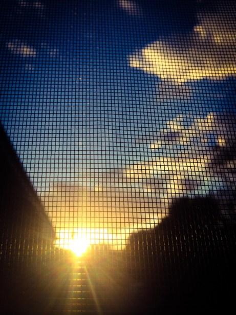 Dana colcleasure, EIL Stuck Series, sun thru screen