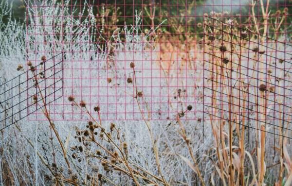 Lori Chung, Thread 4, weed grid