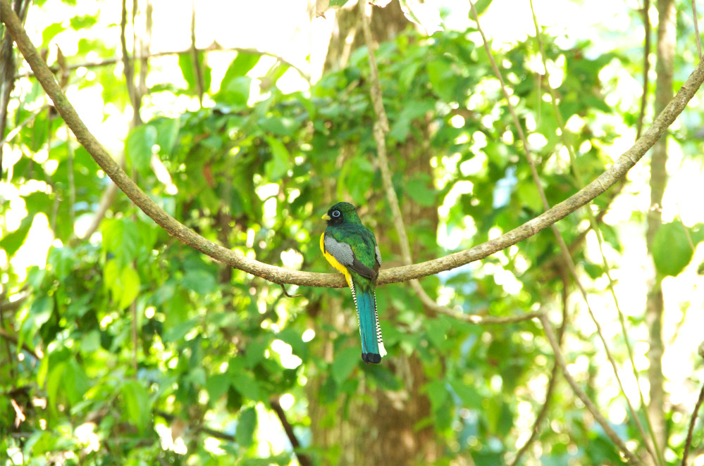 Most epic hiking trail Corcovado birds