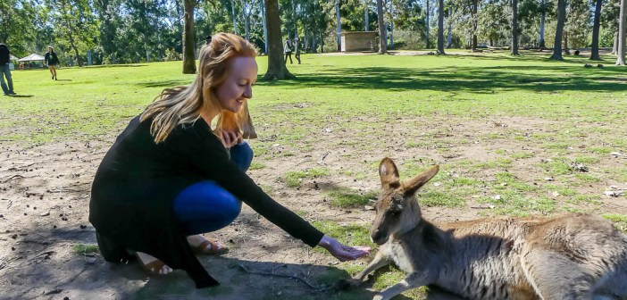 5 fantastic day trips you can do from Brisbane
