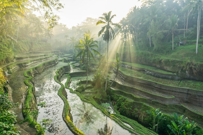 Tegallalang Rice Terraces are something you have to see whilst in Bali. The best way to avoid the crowds is to visit at sunrise! Here are my favourite photos from sunrise at Tegallalang to inspire you.