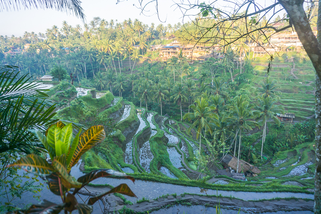 The Tegallalang rice terrace is something you have to see whilst in Bali. The best way to avoid the crowds is to visit at sunrise! Here are my favourite photos from sunrise at Tegallalang to inspire you.