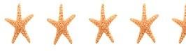 4.5 STARFISH