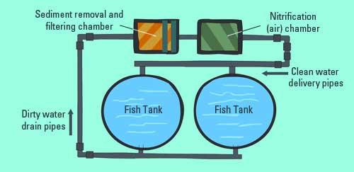 aquaculture recirculating system - ¿Qué es la acuicultura?