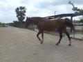 cavalls-12