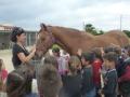 cavalls-16