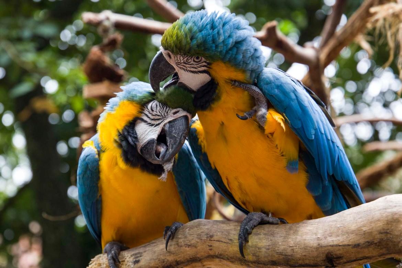 Fotos de viagem - Parque das Aves, Foz do Iguaçu (Brasil)