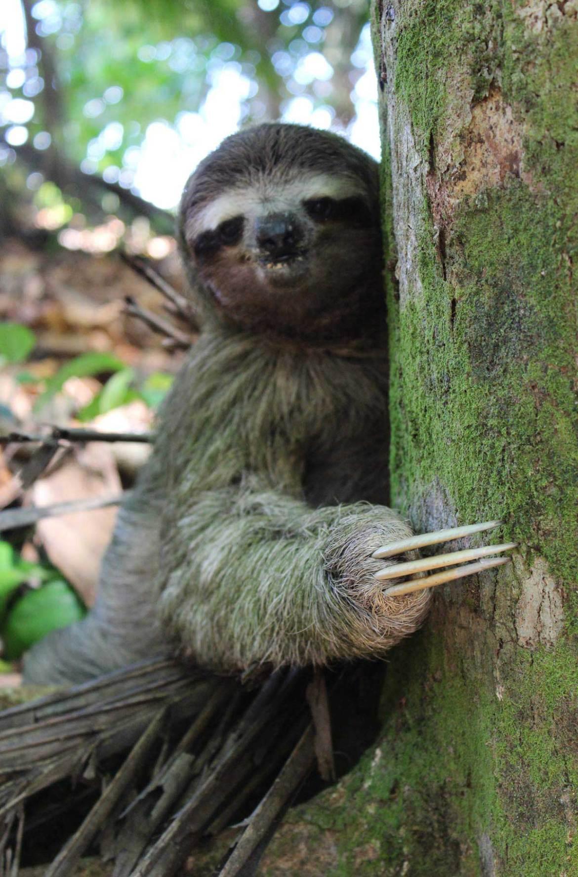 Fotos de viagem - Parque Nacional Cahuita, Cahuita (Costa Rica)