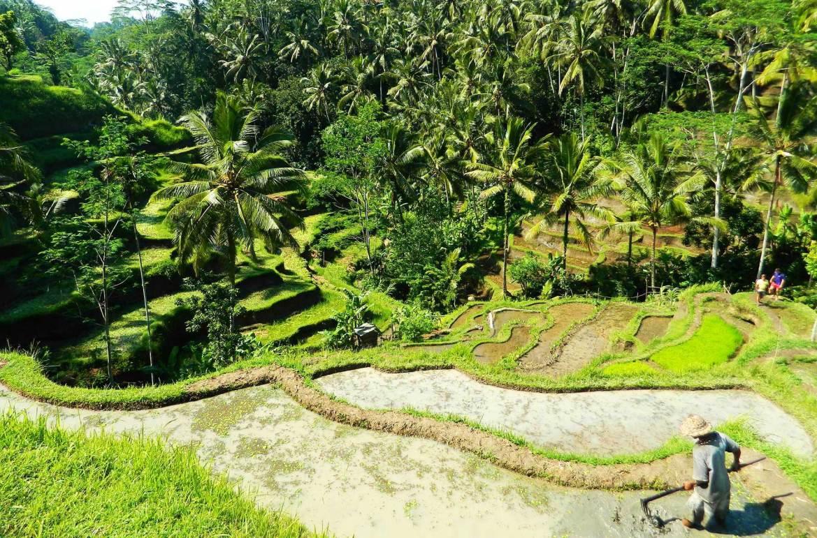 Fotos de viagem - Arrozais de Tegalalang, Ilha de Bali (Indonésia)