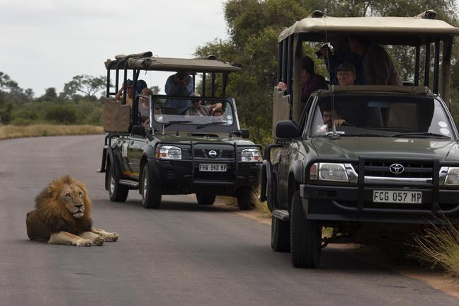 affordable african safari luxury african safari tours african safari tours tripadvisor african safari vacations all inclusive african safari tours cost african safari holidays 2019 best african safari for seniors private african safari tours