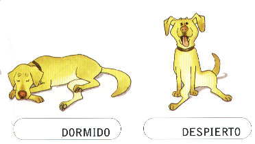 DORMIDO-DESPIERTO
