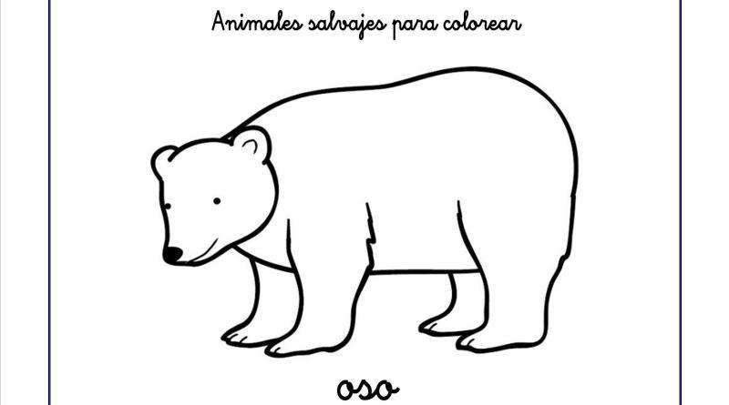 oso colorear