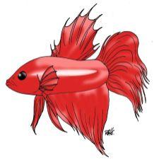 animales marinos 03