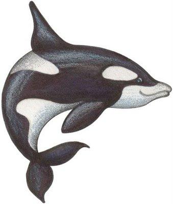 animales marinos 25