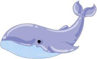 animales marinos12