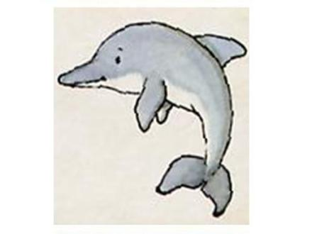 animales marinos31