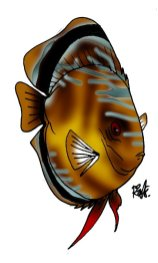 animales marinos37