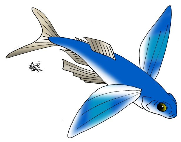 animales marinos63