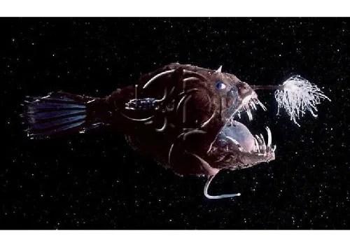 pez Árbol de Navidad