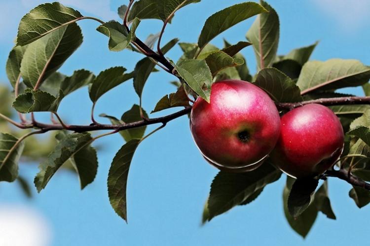 dieta mela rossa