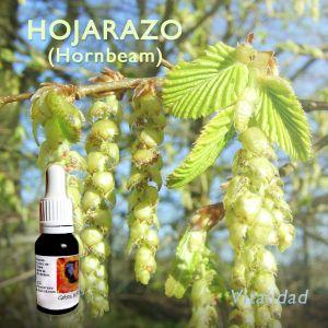 Hojarazo (HORNBEAM)