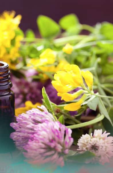 flores Silvestres - Esencias de bach