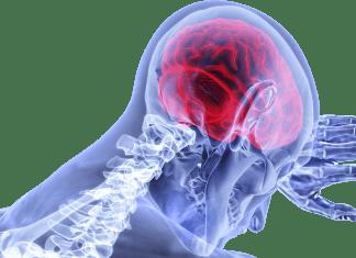 brain 3168269 1280 e1608919746494