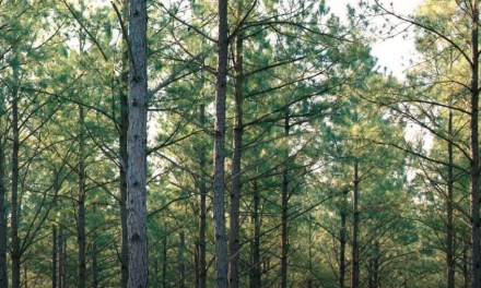 Weyerhaeuser Launches New Sustainability Strategy
