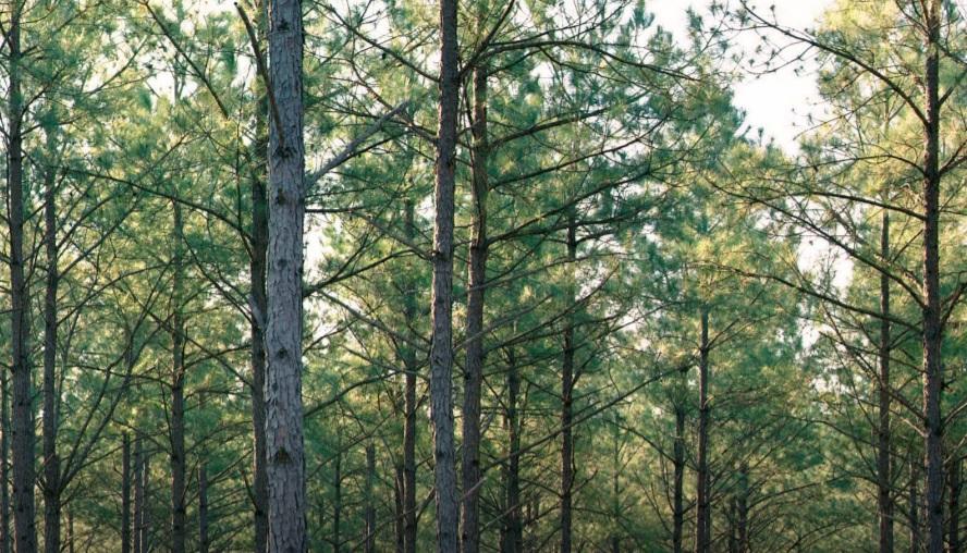 Weyerhaeuser Launches New Sustainability Strategy