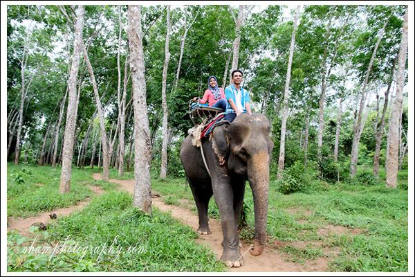 elephant-trekking-krabi05