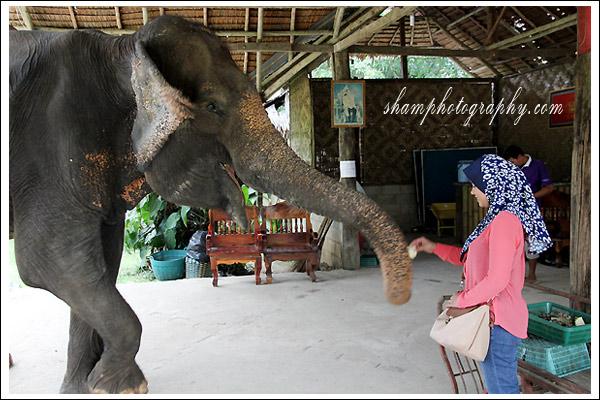 elephant-trekking-krabi06