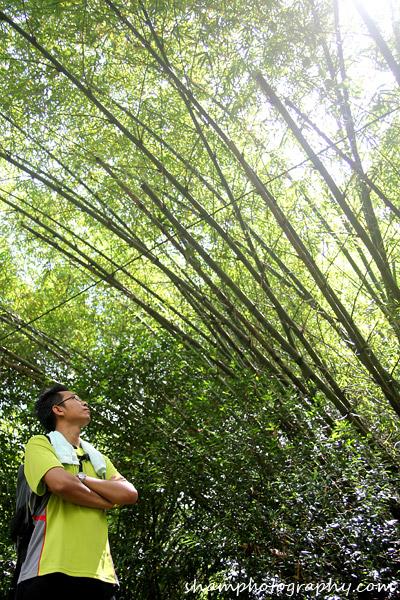 frim-kepong-hutan-simpan-bukit-lagong-alamsemulajadi-nature-hiking-17