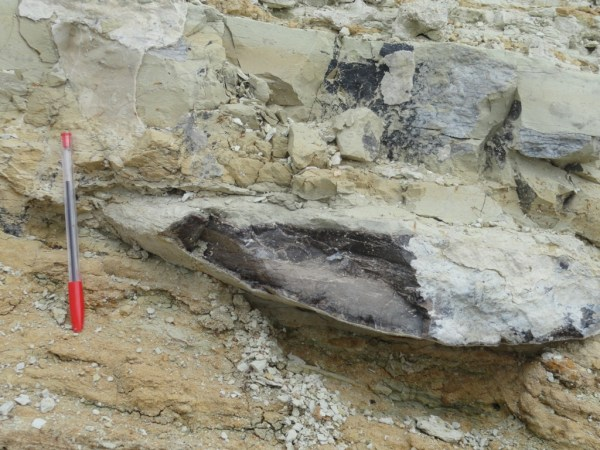 Excursion - Mine Fossils Identification11