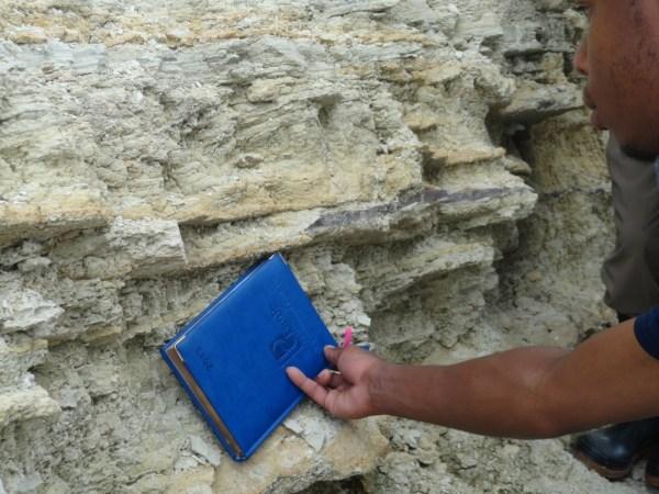 Excursion - Mine Fossils Identification7