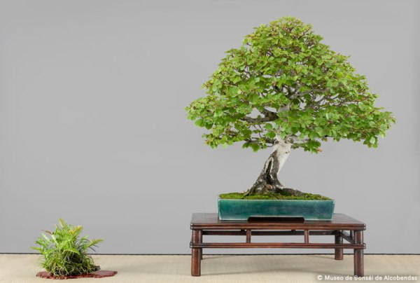nov2014_bonsai_7