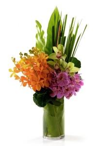 Rhapsody Mokara Orchids | Flowers In Vase | Eska Creative Gifting