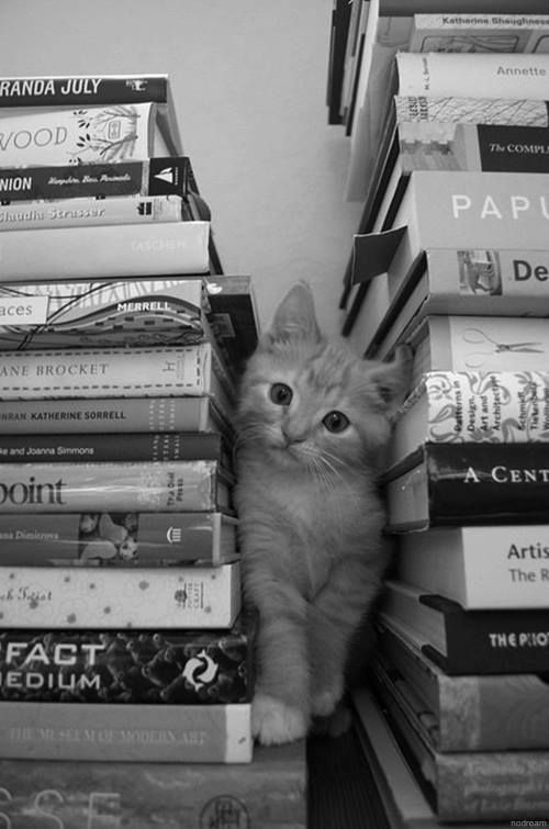 cat-and-books-1