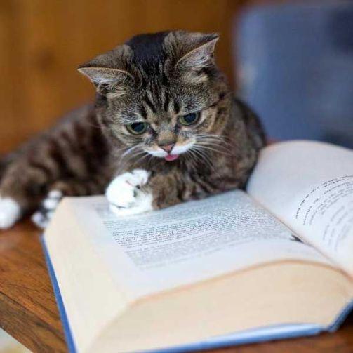 cat-reading-book-kedi-kitap-okuyor-49