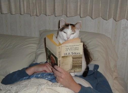 cat-reading-j-r-r-tolkien
