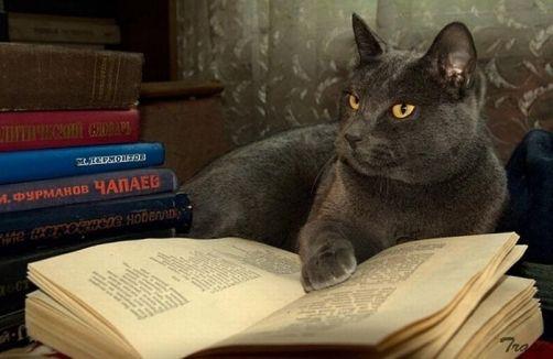 cat-reading-kedi-kitap-okuyor-11