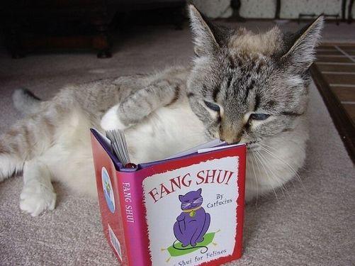 cat-reading-kedi-kitap-okuyor-12