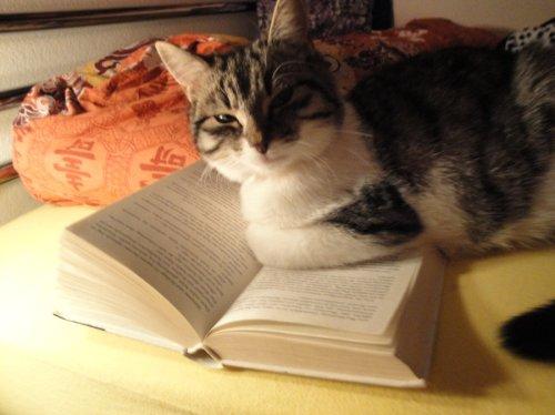 cat-reading-kedi-kitap-okuyor-20