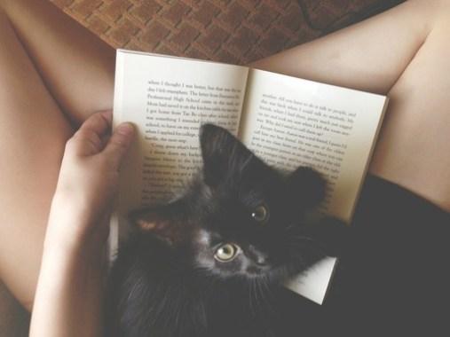 cat-reading-kedi-kitap-okuyor-24
