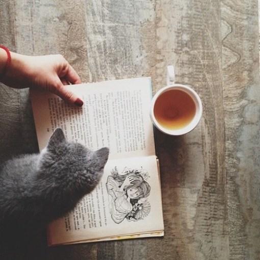 cat-reading-kedi-kitap-okuyor-26