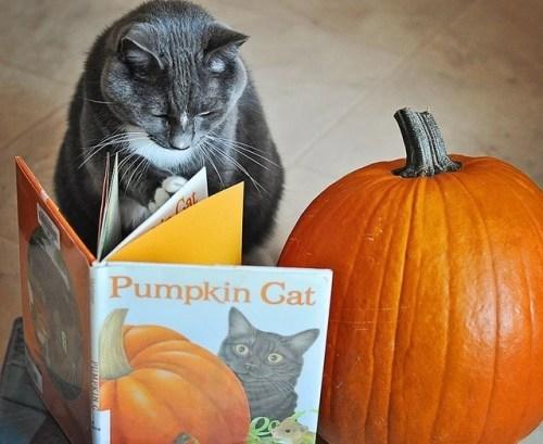 cat-reading-kedi-kitap-okuyor-27