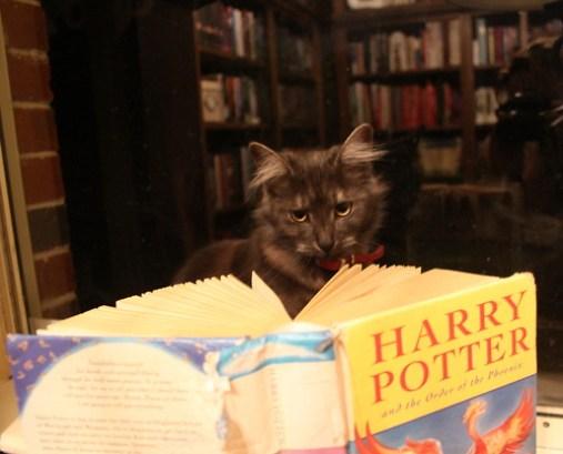 cat-reading-kedi-kitap-okuyor-29