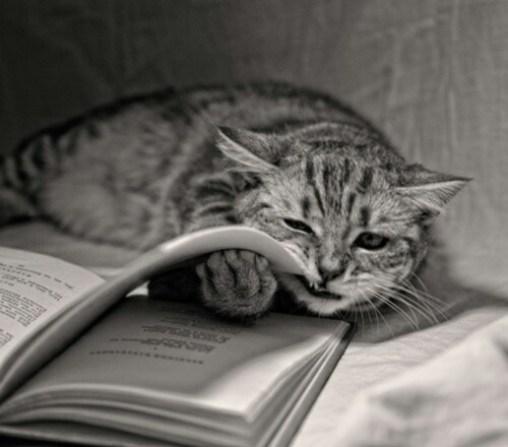 cat-reading-kedi-kitap-okuyor-32